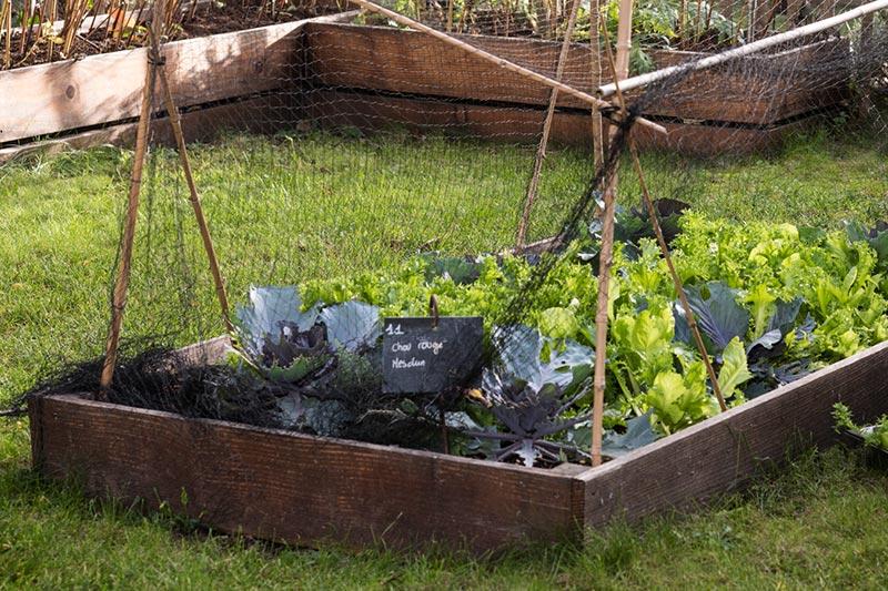 Organic garden FRAME restaurant